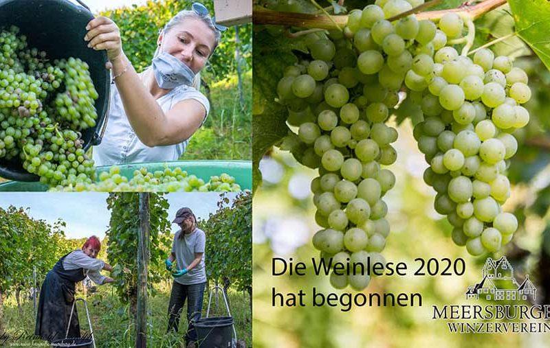 Weinlese-Kolageb2webb